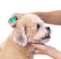 Pipette anti parasitaire pour chien
