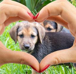 coeur chien