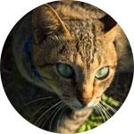 chat dans les fourrés