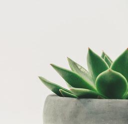 Plante naturelle