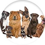 Croquettes pas cher pour tous types de chien