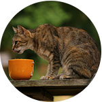 chat qui mange