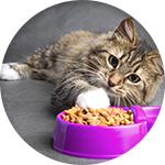 Croquettes wiskas pour chat