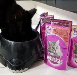 Whiskas chat