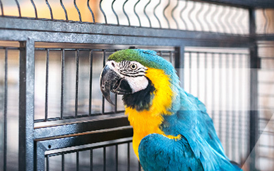 Cage pour perroquet Zolia