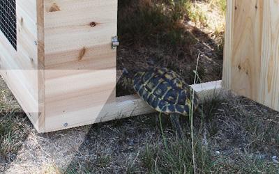 Enclos à tortues Zolia