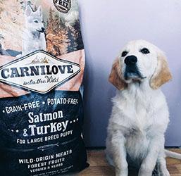 Ingrédient saumon