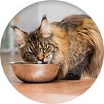 Croquettes ownat pour chat