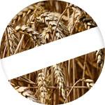 croquettes sans cereales