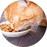 Croquettes chat nutrivet