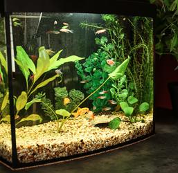 Aquarium Superfish