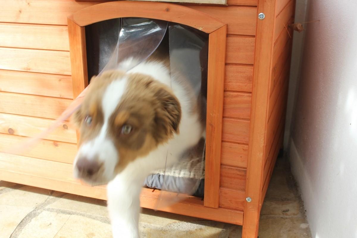 Porte Plastique Pour Niche à Toit Plat Pour Chien Accessoires Pour - Porte pour chien