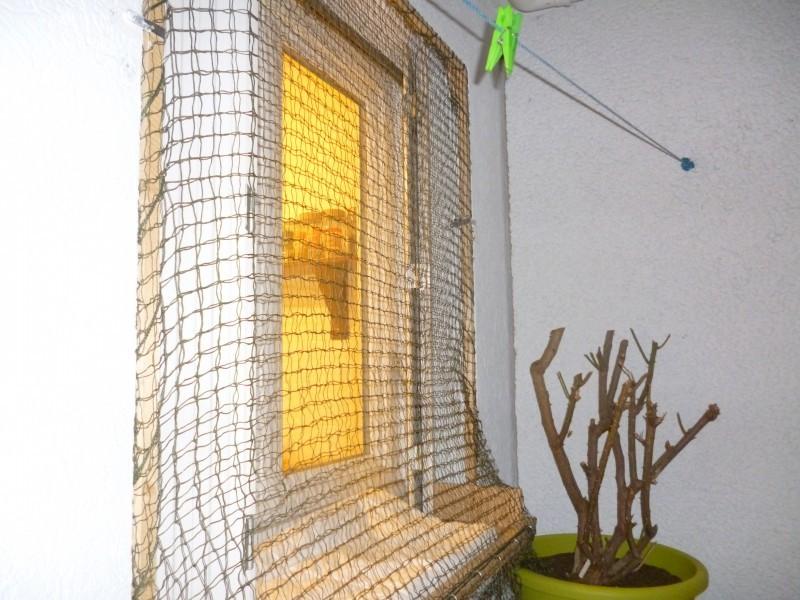 filet de protection renforc chati re filet. Black Bedroom Furniture Sets. Home Design Ideas