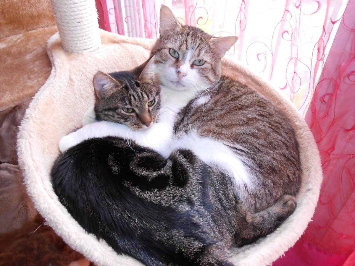 nid xl pour poteau arbre chat beige arbre chat. Black Bedroom Furniture Sets. Home Design Ideas
