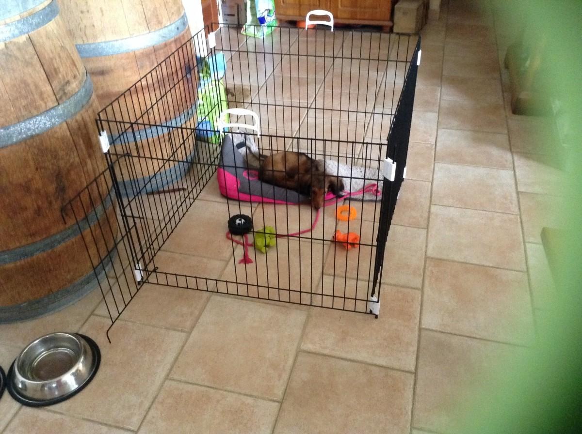 Parc pour animaux dog training parc et cage en m tal for Parc animaux yvelines
