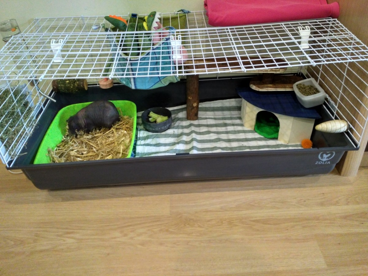 maison d 39 angle pour rongeurs et lapins maison pour rongeur. Black Bedroom Furniture Sets. Home Design Ideas