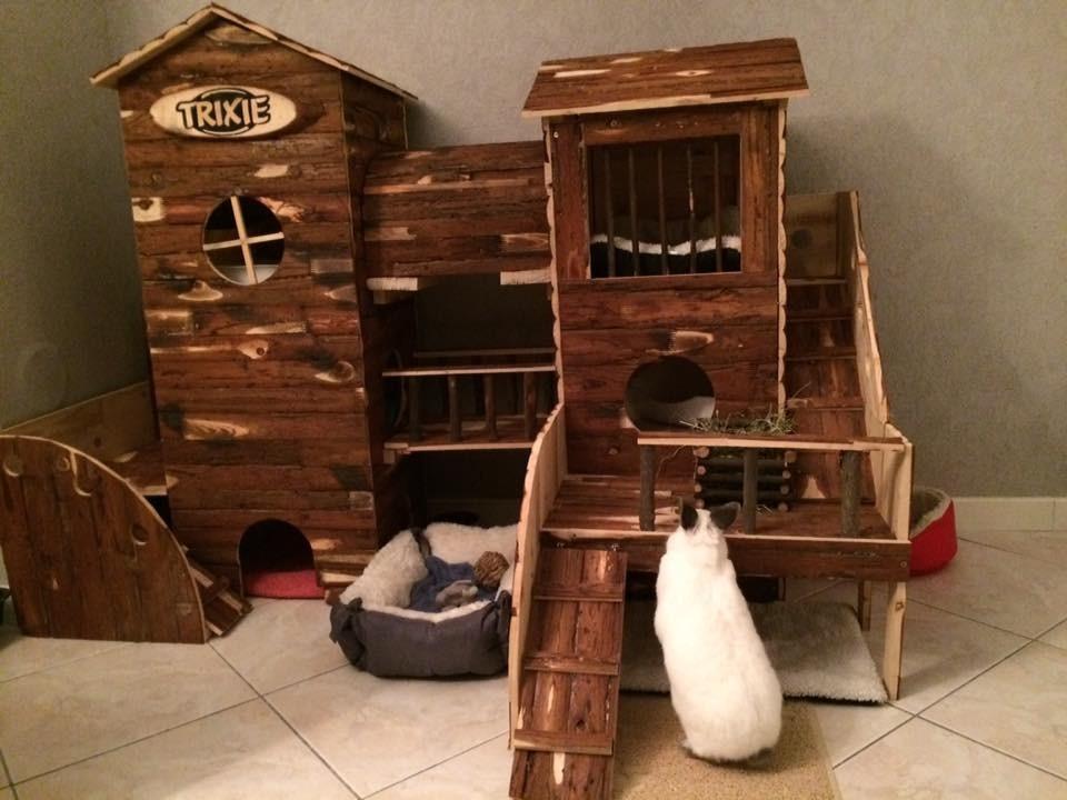 adventure land bosse aire de jeu pour lapin et cochon d 39 inde jouet rongeur. Black Bedroom Furniture Sets. Home Design Ideas