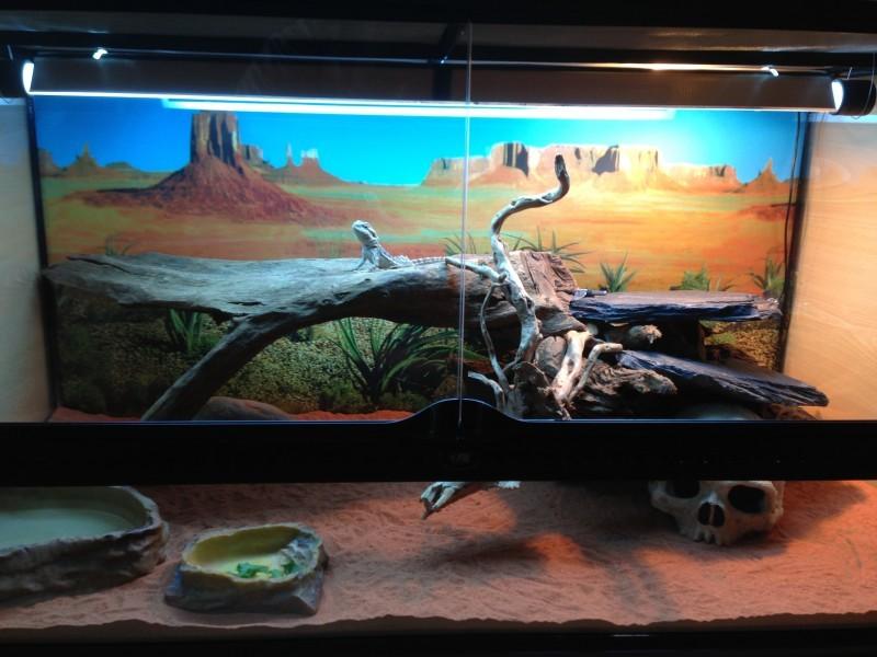 Avis sur fond d cor de terrarium motif d sert - Decor fond terrarium desertique ...