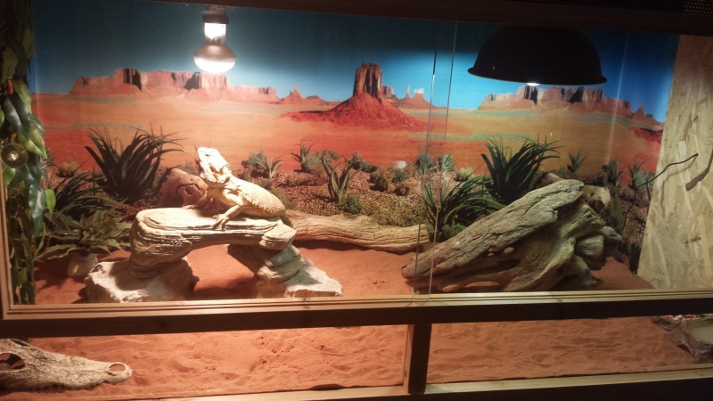 Fond d cor de terrarium motif d sert d coration - Decor fond terrarium desertique ...