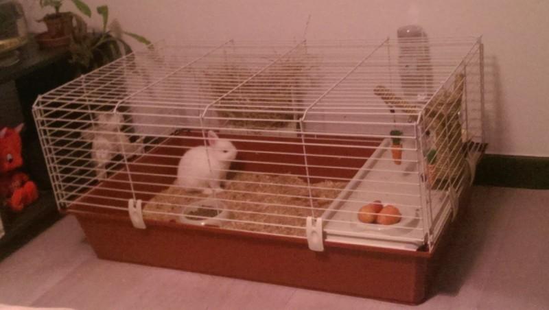 cage rabbit 100 pour lapin et cochon d 39 inde cage cochon. Black Bedroom Furniture Sets. Home Design Ideas