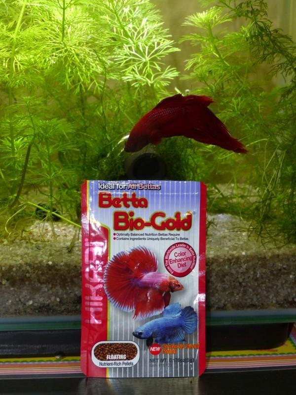 Nourriture sp ciale betta combattant hikari betta biogold for Nourriture poisson betta