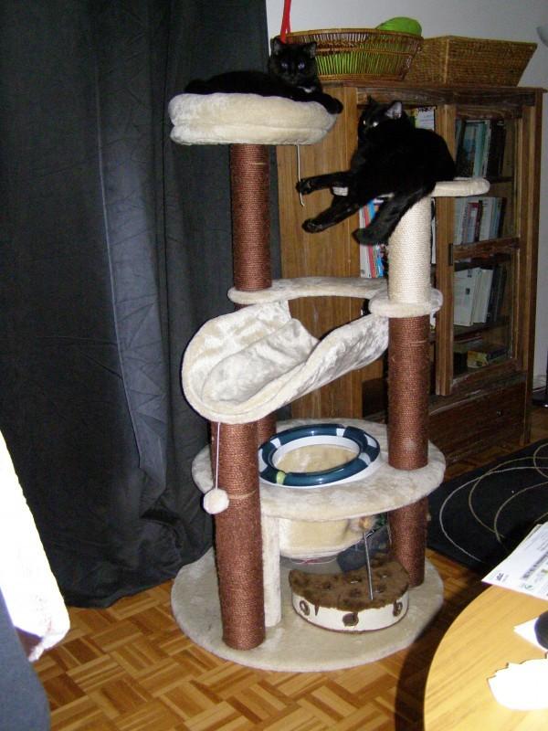 avis sur arbre chat arietta. Black Bedroom Furniture Sets. Home Design Ideas