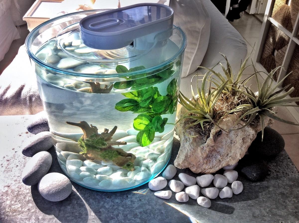 aquarium kit round 360 10l aquarium et meuble. Black Bedroom Furniture Sets. Home Design Ideas