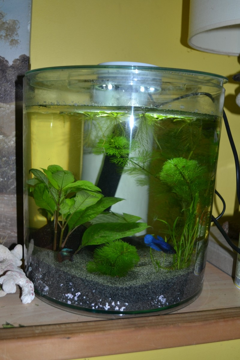 Aquarium kit round 360 10l aquarium et meuble for Couvercle pour aquarium