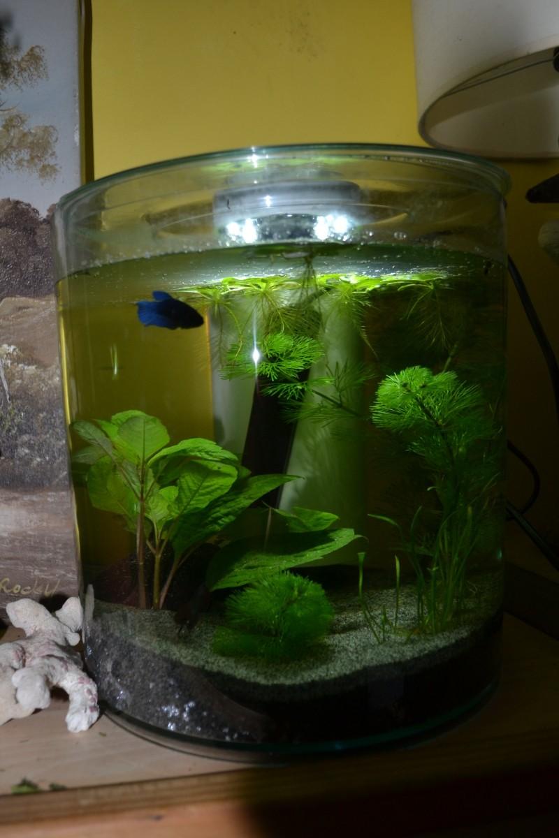 déco round aquarium kit