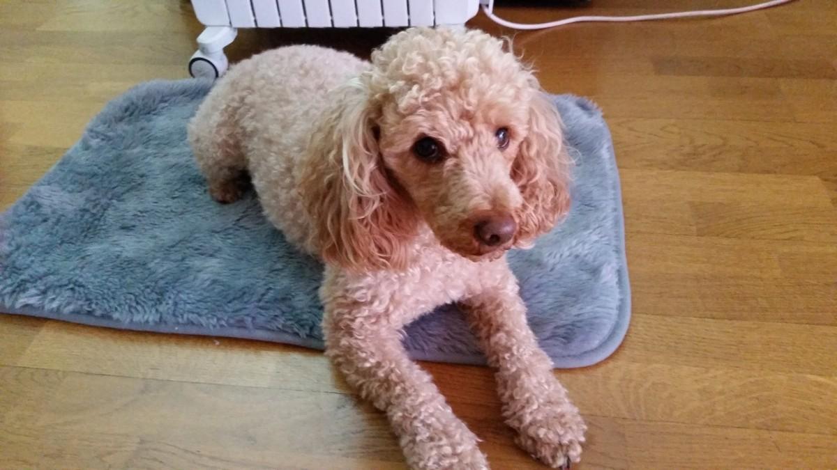 Avis sur couverture isolante pour chien - Couverture pour petit chien ...