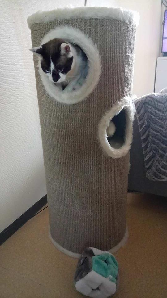 tour griffer et arbre chat blanc et beige 100cm. Black Bedroom Furniture Sets. Home Design Ideas