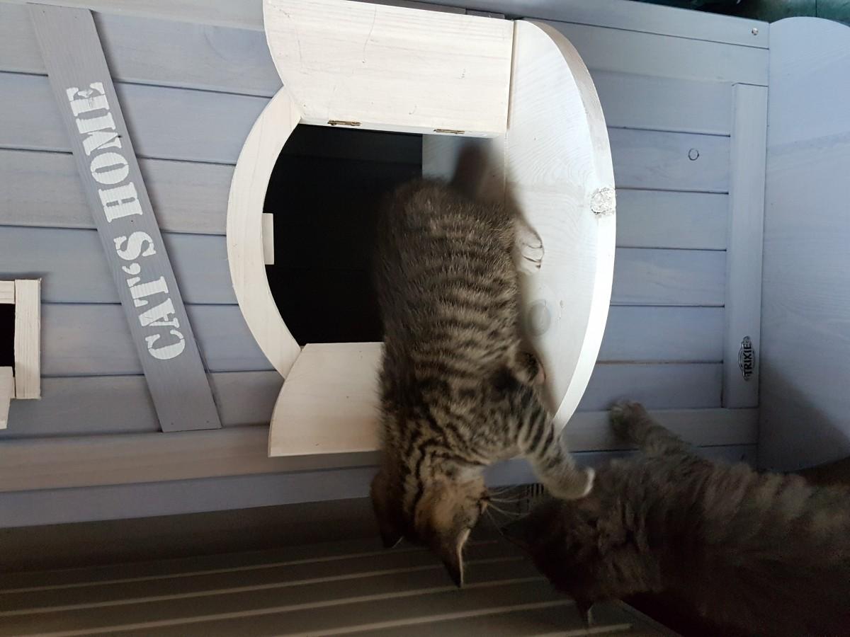 Avis sur cat 39 s home maison d 39 ext rieur pour chat for Exterieur pour chat