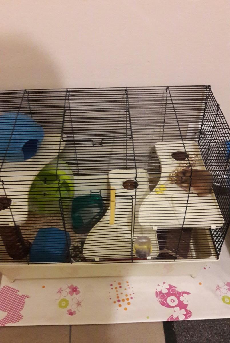cage quip e et spacieuse avec tunnel pour hamster cage. Black Bedroom Furniture Sets. Home Design Ideas