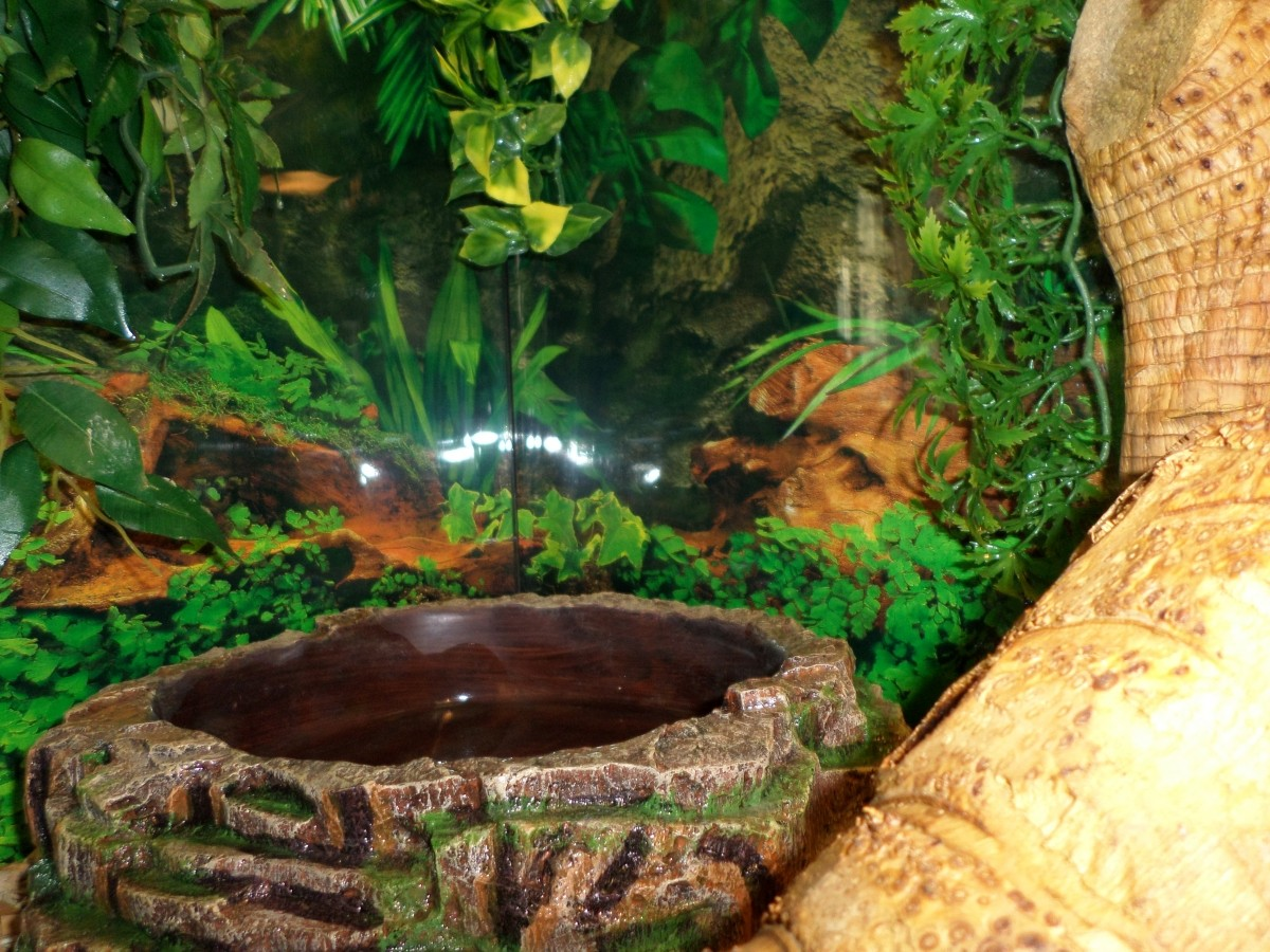 Fond d cor de terrarium motif corce et jungle d coration - Decor fond terrarium desertique ...