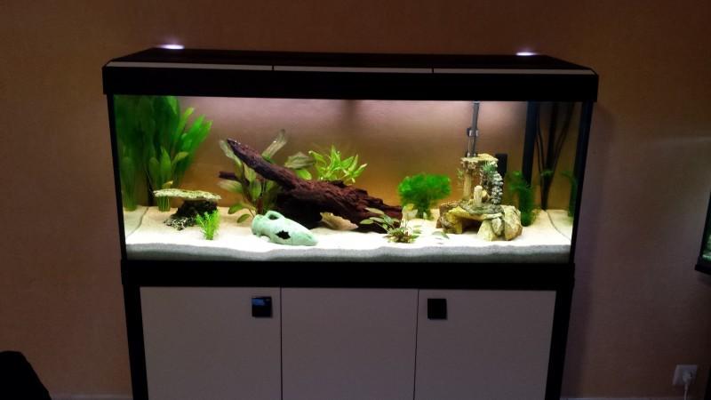 aquarium roma 240 tout quip meuble aquarium de 101 400 litres. Black Bedroom Furniture Sets. Home Design Ideas