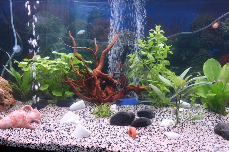 Prix aquarium lyon for Aquarium prix
