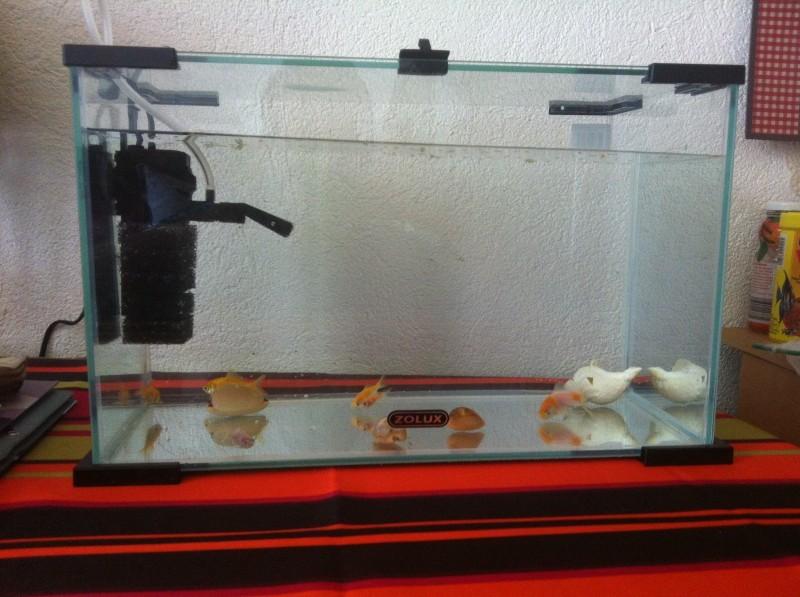 Aquarium nanolife first noir aquarium et meuble for Filtre poisson rouge