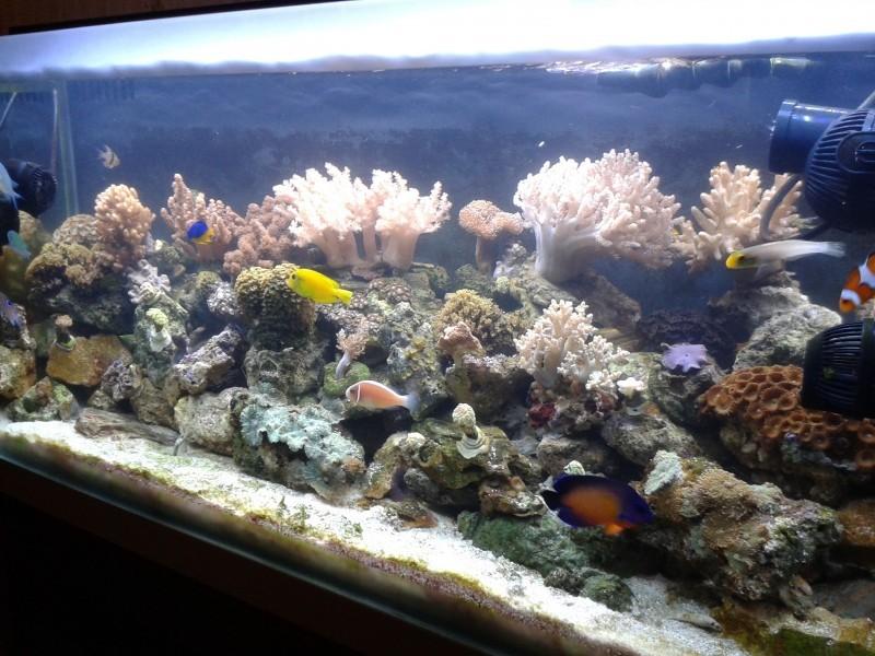 Decor Corail Pour Aquarium