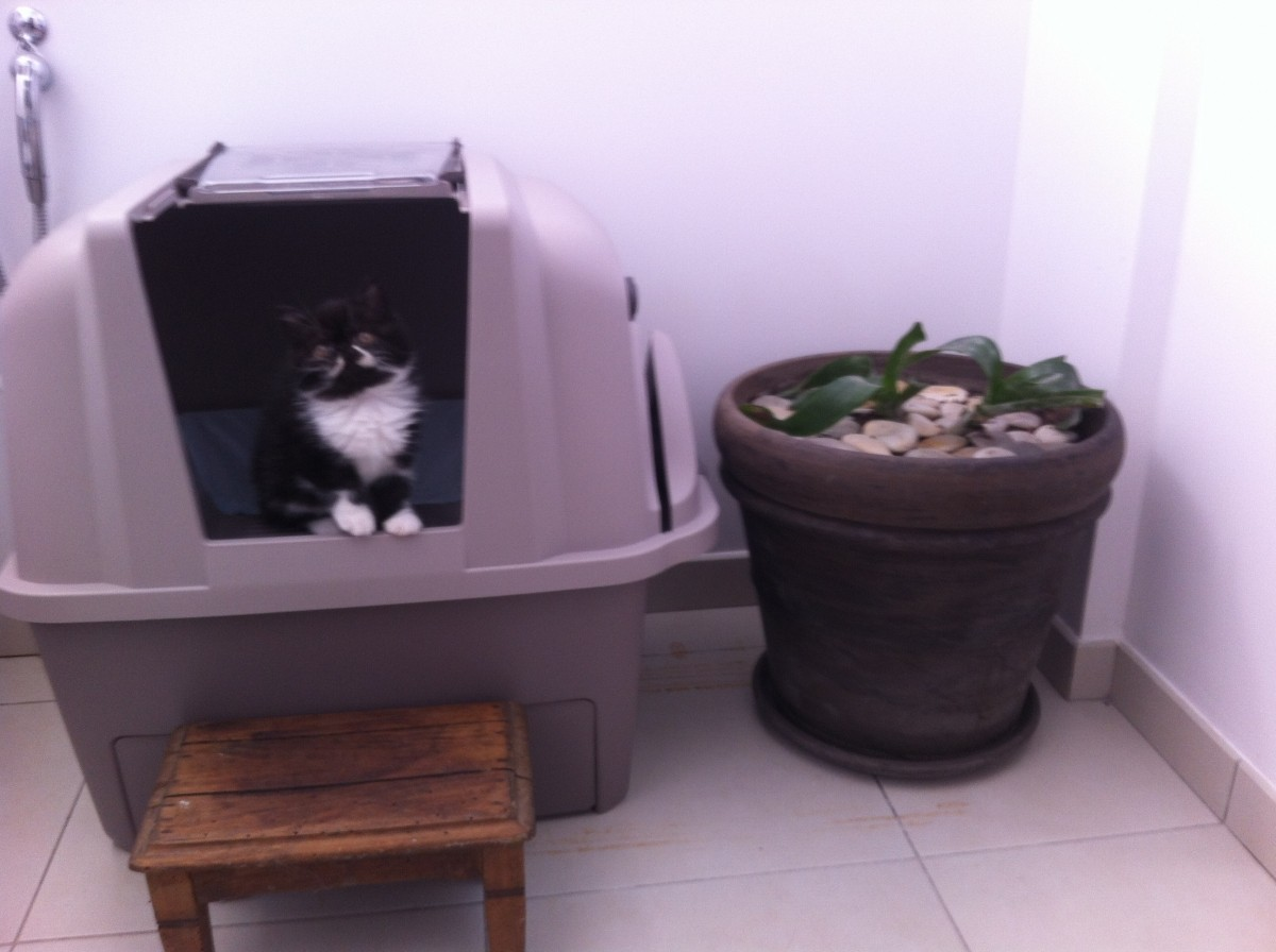 maison de toilette smartsift auto nettoyante pour chat bac et maison de toilette. Black Bedroom Furniture Sets. Home Design Ideas
