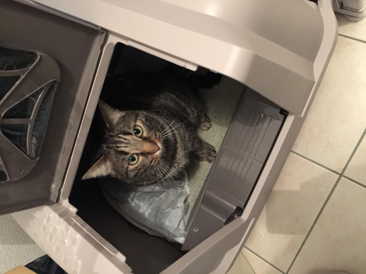 maison de toilette smartsift auto nettoyante pour chat bac et maison de toilette