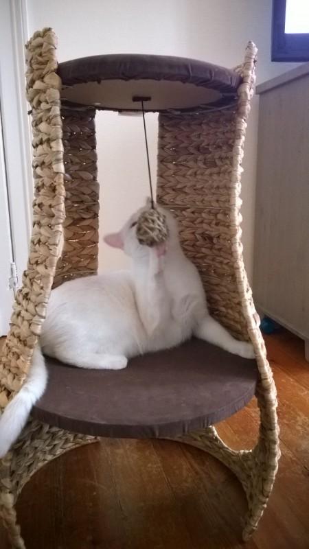 arbre a chat hangout