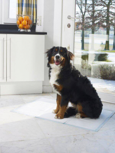 Tapis ducateur chien chiot - Tapis educateur proprete pour chien ...