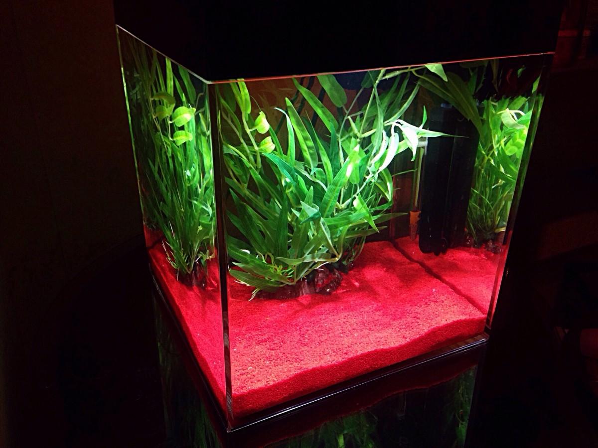 Nano gravier pour crevettes rouge indien sable et for Gravier aquarium