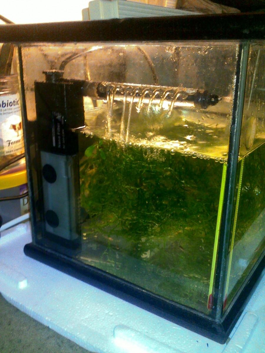 Filtre interne d 39 angle dennerle nano clean pour mini for Aquarium angle