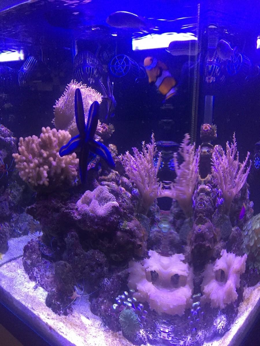 Aquariums nano marinus cube 60 aquarium et meuble for Aquarium nano marin