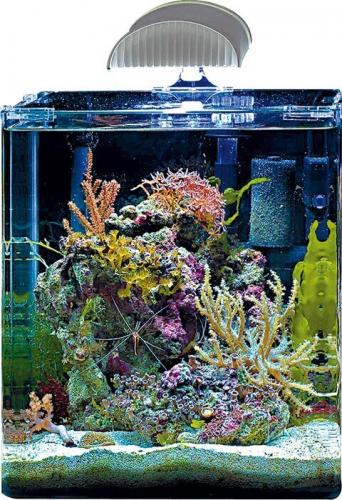 Questions sur aquariums nano marinus cube 60 for Aquarium marin complet