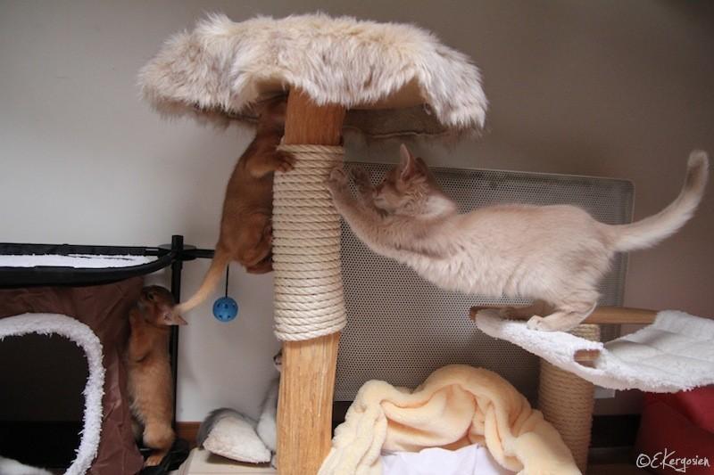 avis sur arbre chat naturel classic no 1 joy cr me. Black Bedroom Furniture Sets. Home Design Ideas
