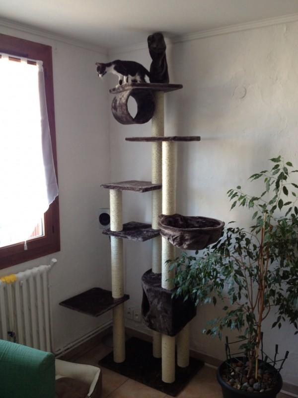 arbre a chat sol plafond