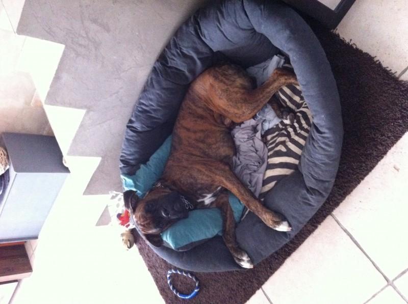 Sofa soft bedding coussin et corbeille plastique chien - Fabriquer panier chien ...