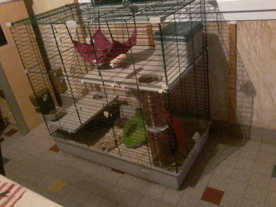 cage sara 80 100 cm pour furet et chinchilla cage chinchilla. Black Bedroom Furniture Sets. Home Design Ideas